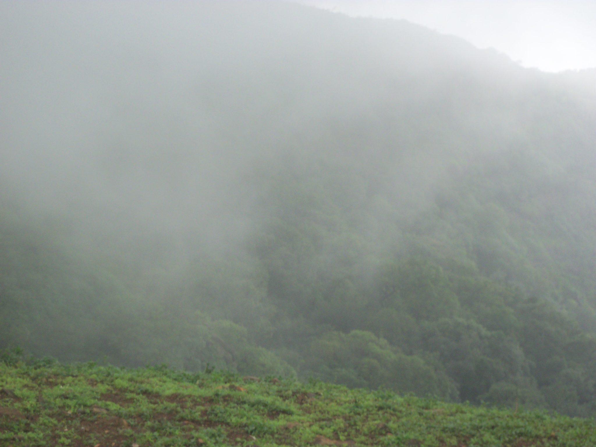 Mountain Fog - Pic by Shakti