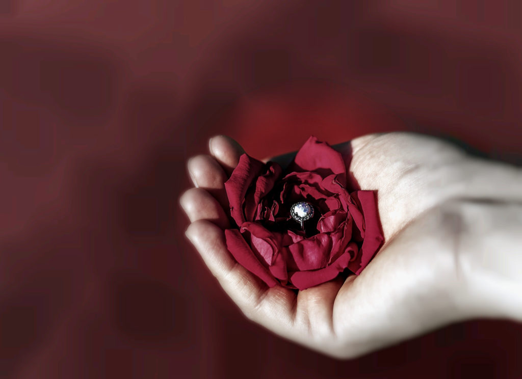 To Dear Rose - Story by Babel